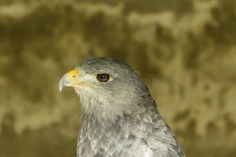 Retrato del pájaro de un depredador fotos de archivo libres de regalías