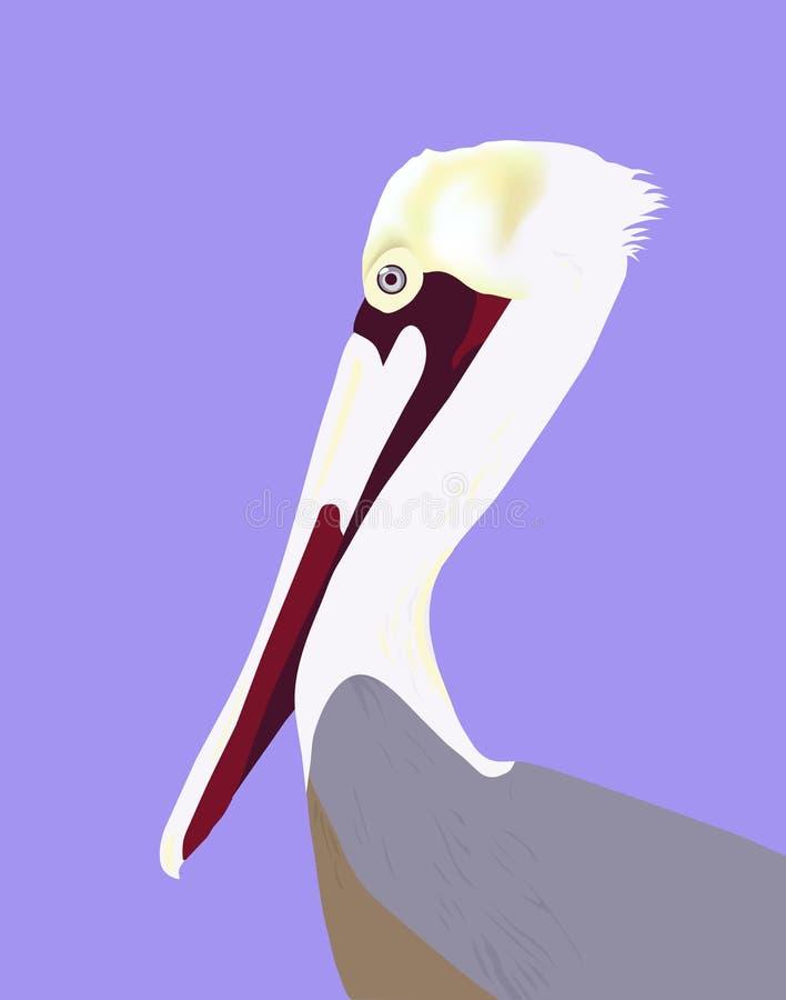 Retrato del pelícano stock de ilustración