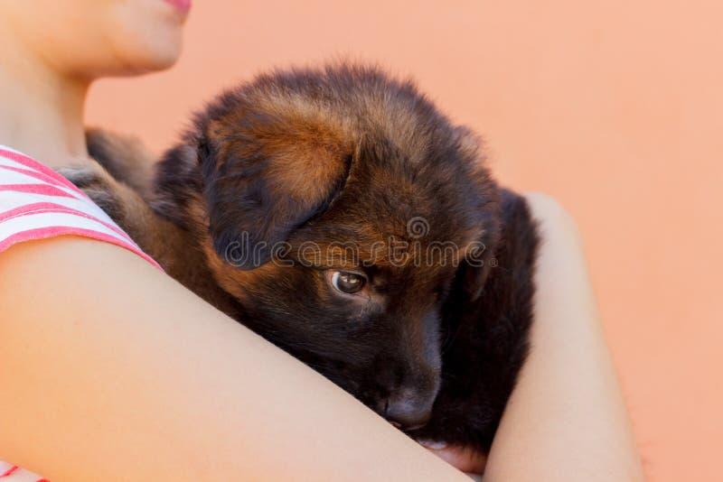 Retrato del perrito del pastor alemán que presenta en las manos del ` s de la mujer foto de archivo