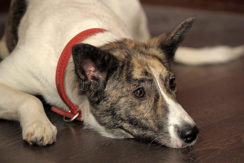 Retrato del perro foto de archivo