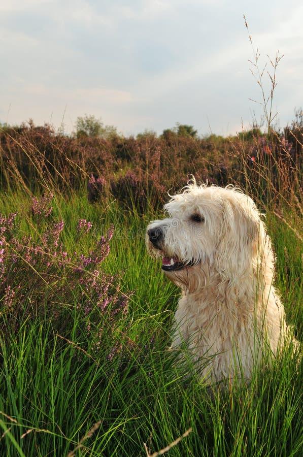 Retrato del perro fotos de archivo libres de regalías