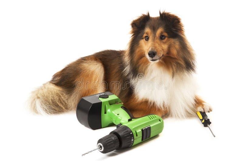 Retrato del perro con la perforadora y el destornillador fotografía de archivo