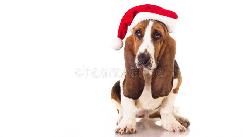 Retrato del perro de la Navidad imagen de archivo