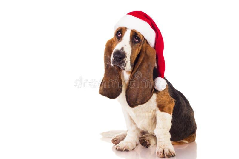 Retrato del perro de la Navidad imagenes de archivo