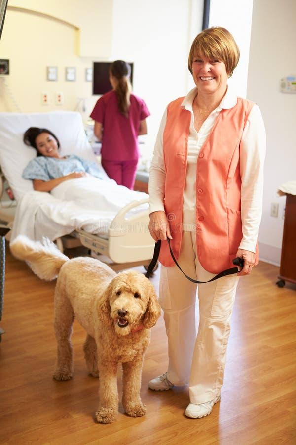Retrato del perro de la terapia del animal doméstico que visita al paciente femenino en hospital foto de archivo