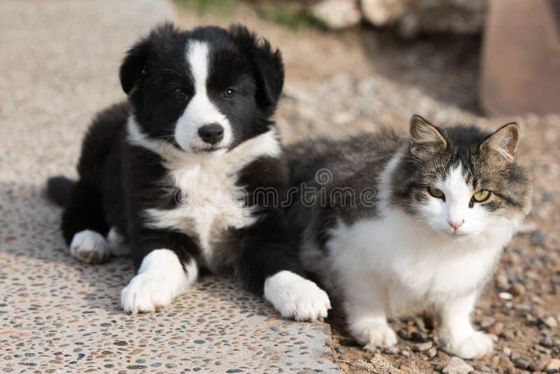 Retrato del perro de perrito del border collie con un gato fotos de archivo libres de regalías