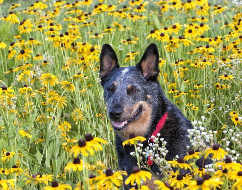 Retrato del perro en Wildflowers foto de archivo libre de regalías