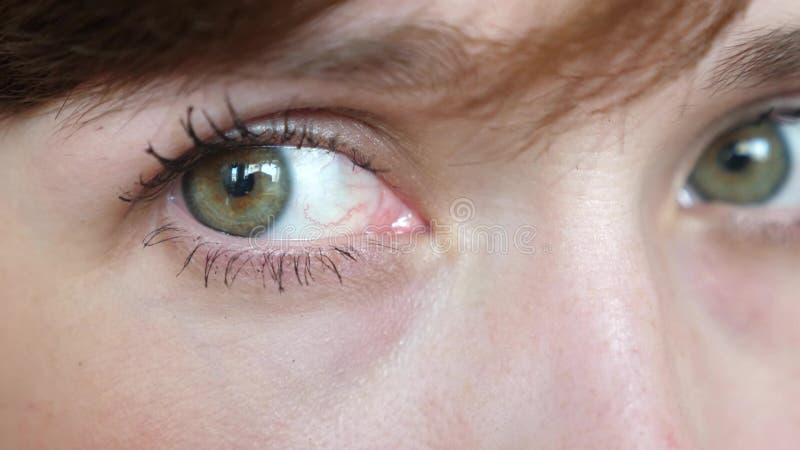 Retrato del primer de ojos gris-verdes hermosos de una mujer hermosa joven primer hermoso de las muchachas del galaza fotografía de archivo libre de regalías