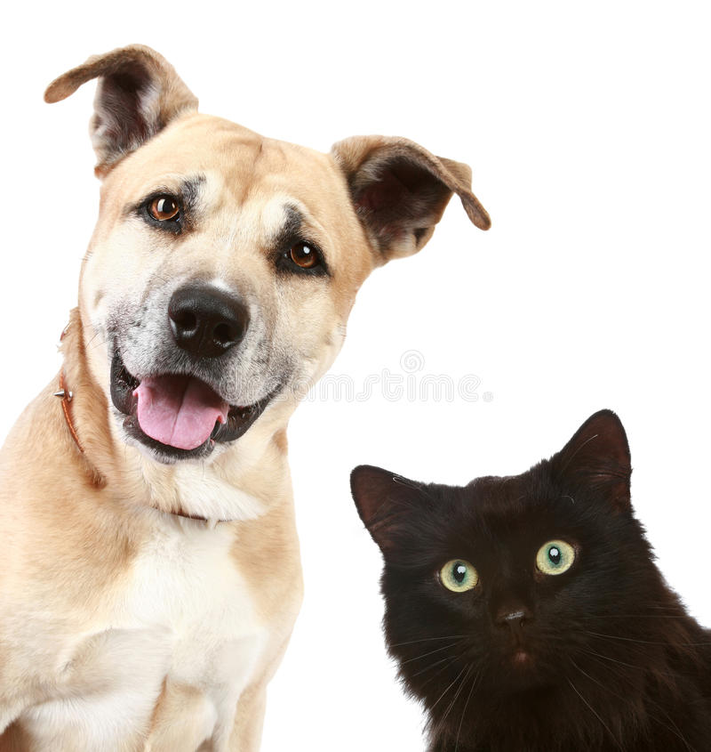 Retrato del primer de un gato y de un perro fotografía de archivo libre de regalías