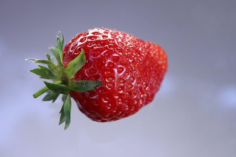 Retrato del primer de una fruta roja y brillante brillante de la fresa, ilusión flotante fotos de archivo