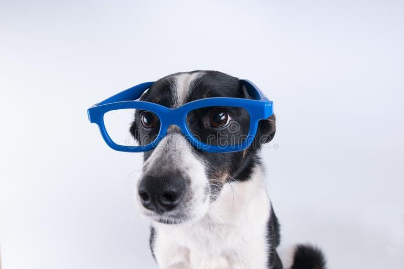 Retrato del primer del perro con la calculadora imágenes de archivo libres de regalías
