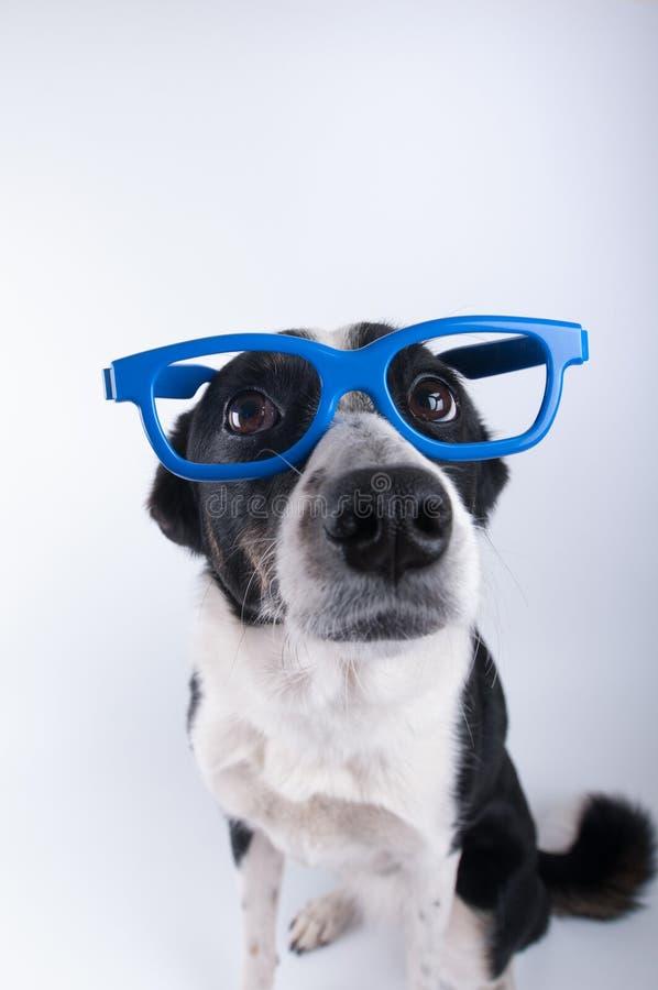 Retrato del primer del perro con la calculadora foto de archivo libre de regalías