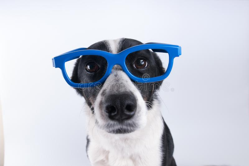 Retrato del primer del perro con la calculadora fotos de archivo libres de regalías
