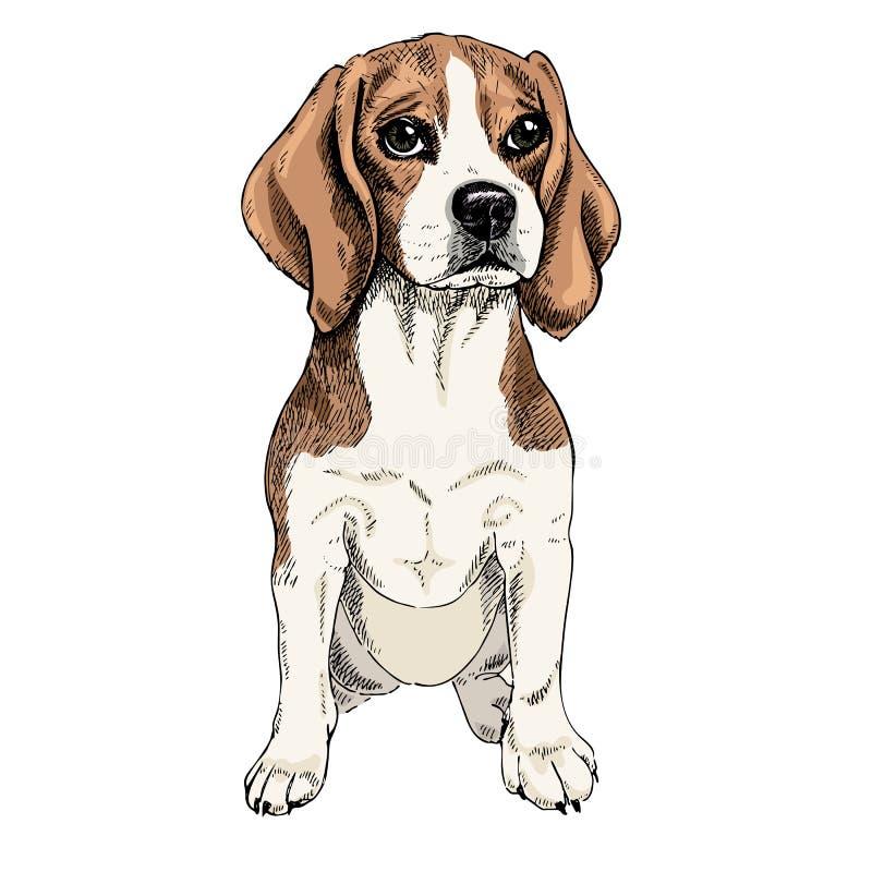 Retrato del primer del perro del beagle que se sienta Ejemplo coloreado Arte grabado vector Perrito smilling amistoso aislado enc stock de ilustración