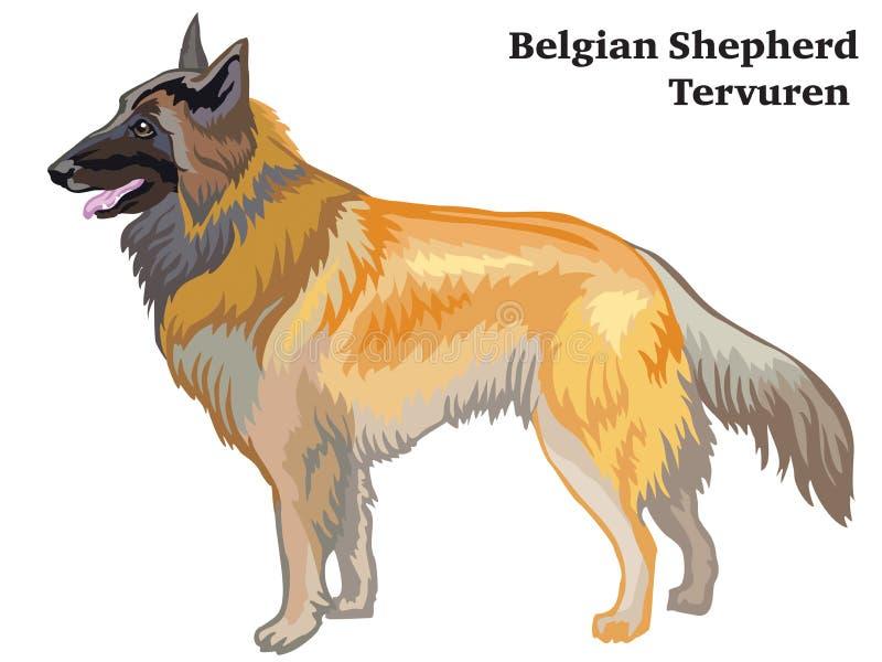 Retrato derecho decorativo coloreado del ejemplo belga del vector de Tervuren del pastor ilustración del vector