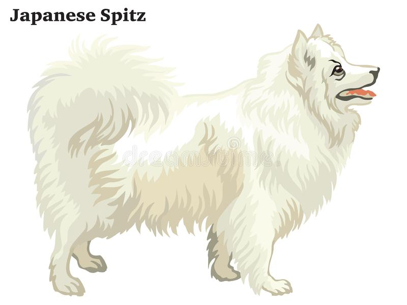 Retrato derecho decorativo coloreado del ejemplo japonés del vector del perro de Pomerania libre illustration