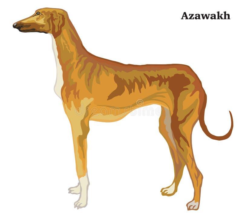 Retrato derecho decorativo coloreado del ejemplo del vector de Azawakh ilustración del vector