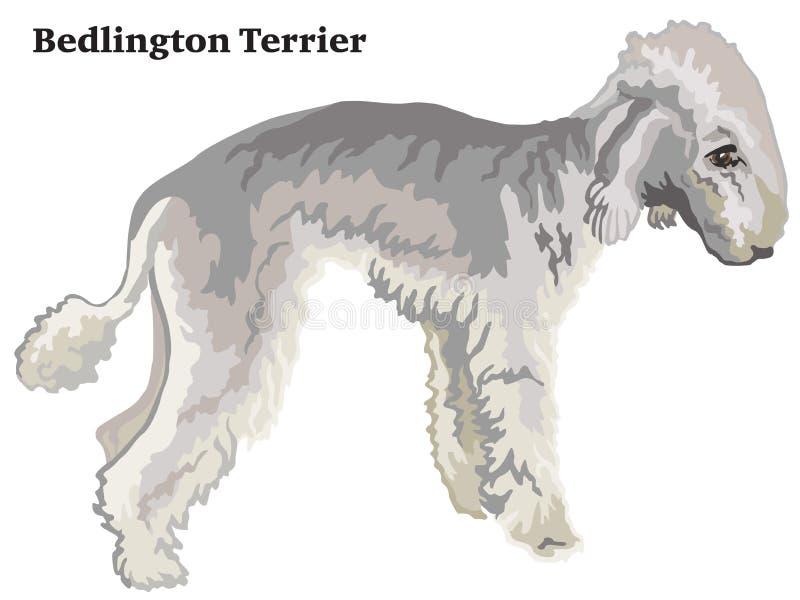 Retrato derecho decorativo coloreado del ejemplo del vector de Bedlington Terrier ilustración del vector