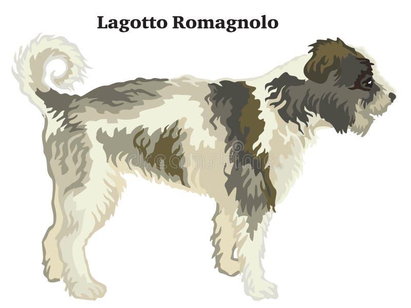 Retrato derecho decorativo coloreado del ejemplo del vector de Lagotto Romagnolo stock de ilustración
