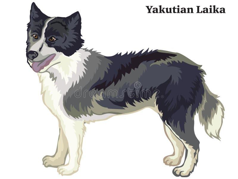 Retrato derecho decorativo coloreado del ejemplo del vector de Yakutian Laika ilustración del vector