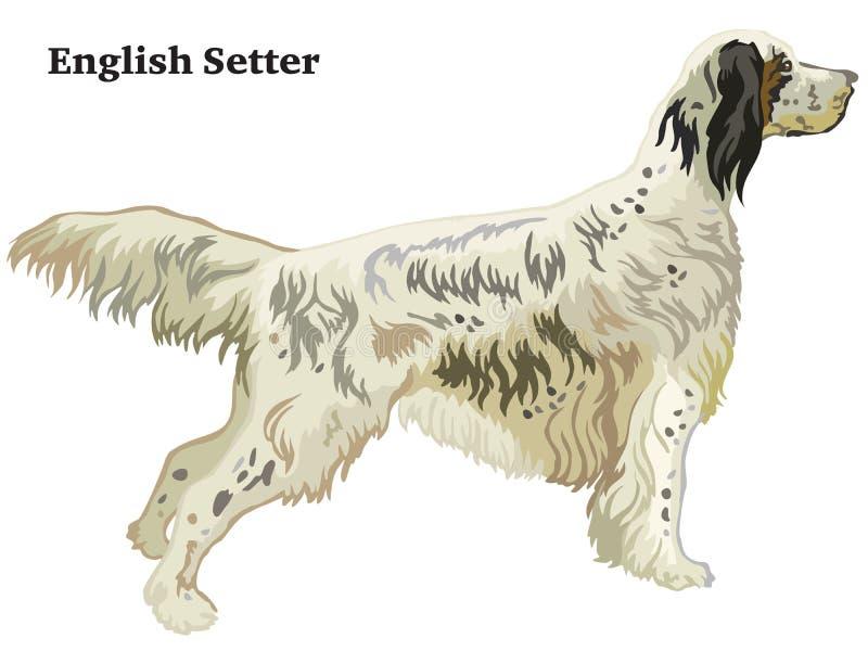 Retrato derecho decorativo coloreado del ejemplo del vector del organismo inglés stock de ilustración