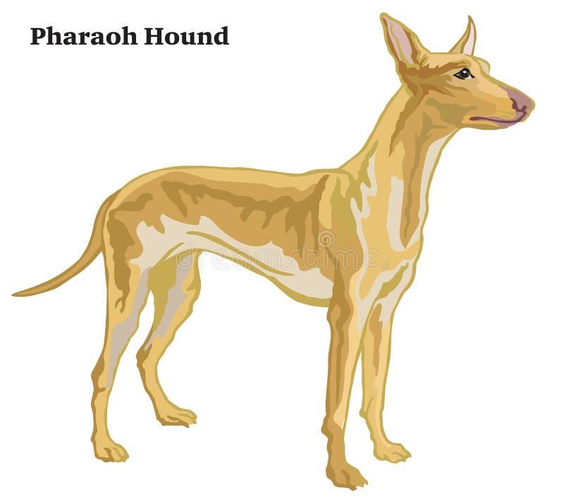 Retrato derecho decorativo coloreado del ejemplo del vector del perro del faraón stock de ilustración