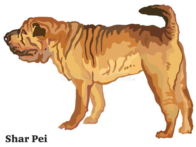 Retrato derecho decorativo coloreado del illustra del vector de Shar Pei libre illustration