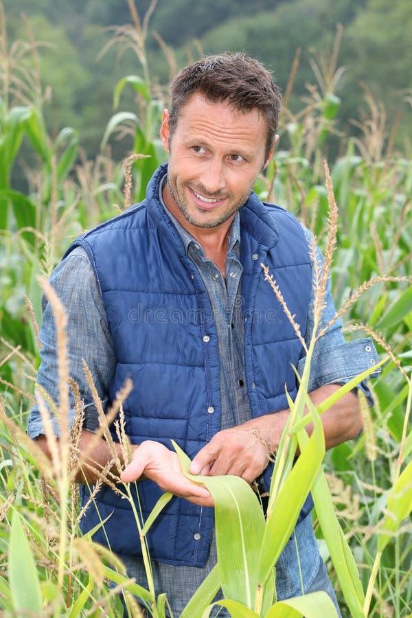Retrato do agrónomo imagens de stock