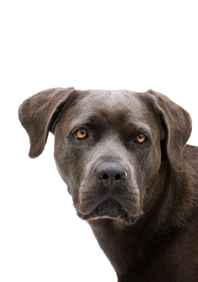 Retrato do cão fotos de stock