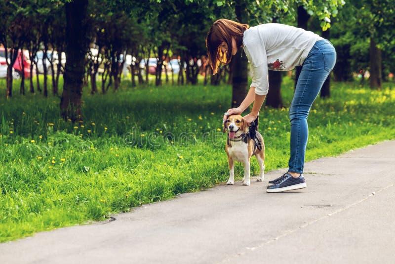 Retrato do cão bonito do lebreiro no parque em horas de verão Retrato engra?ado do animal de estima??o imagem de stock royalty free