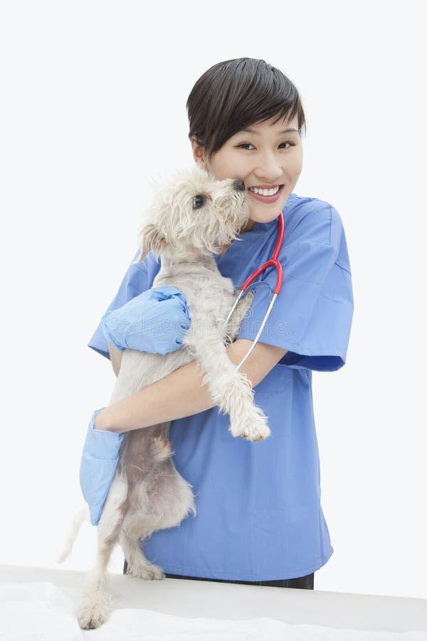 Retrato do cão de afago veterinário fêmea asiático sobre o fundo cinzento foto de stock royalty free