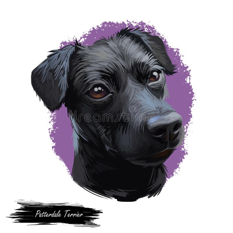 Retrato do cão de Patterdale Terrier isolado no branco Ilustração da arte de Digitas do cão tirado mão para a Web, a cópia do t-s ilustração stock