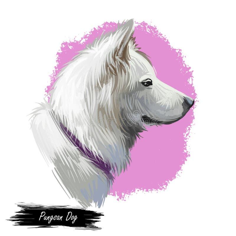 Retrato do cão de Pungsan isolado no branco Ilustração da arte de Digitas do cão tirado mão para a Web, a cópia do t-shirt e o pr ilustração stock