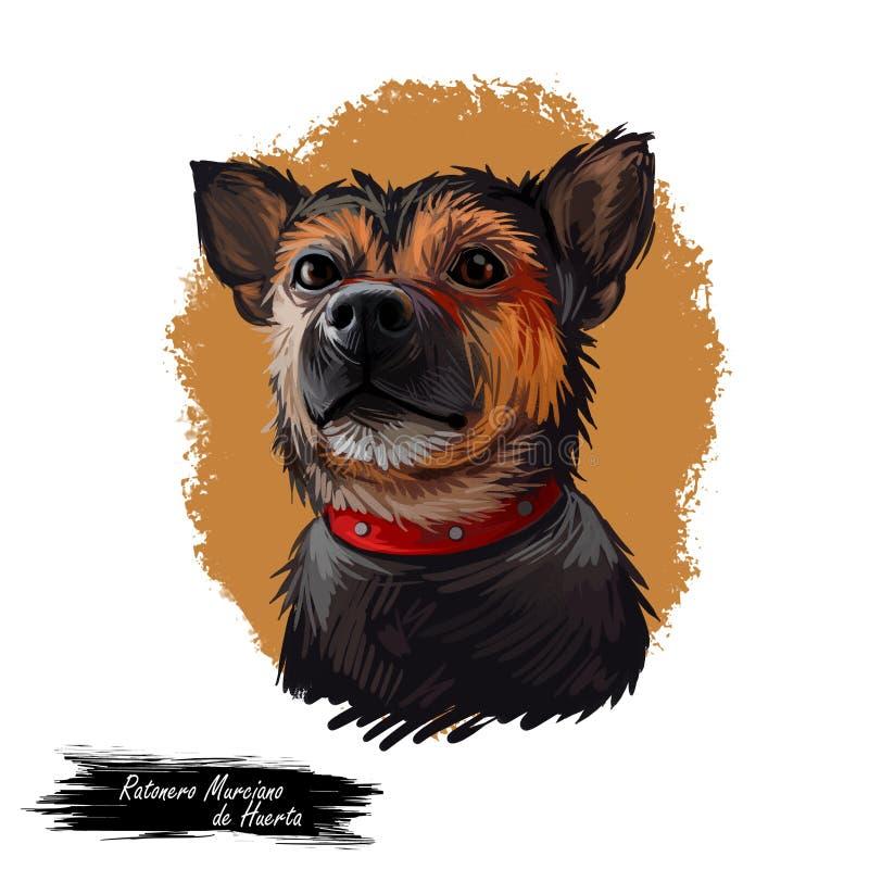 Retrato do cão de Ratonero Murciano de Huerta isolado no branco Ilustração da arte de Digitas do cão tirado mão para a Web, cópia ilustração royalty free
