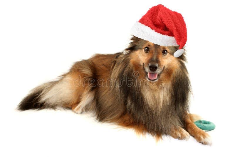 Retrato do cão do Natal fotografia de stock
