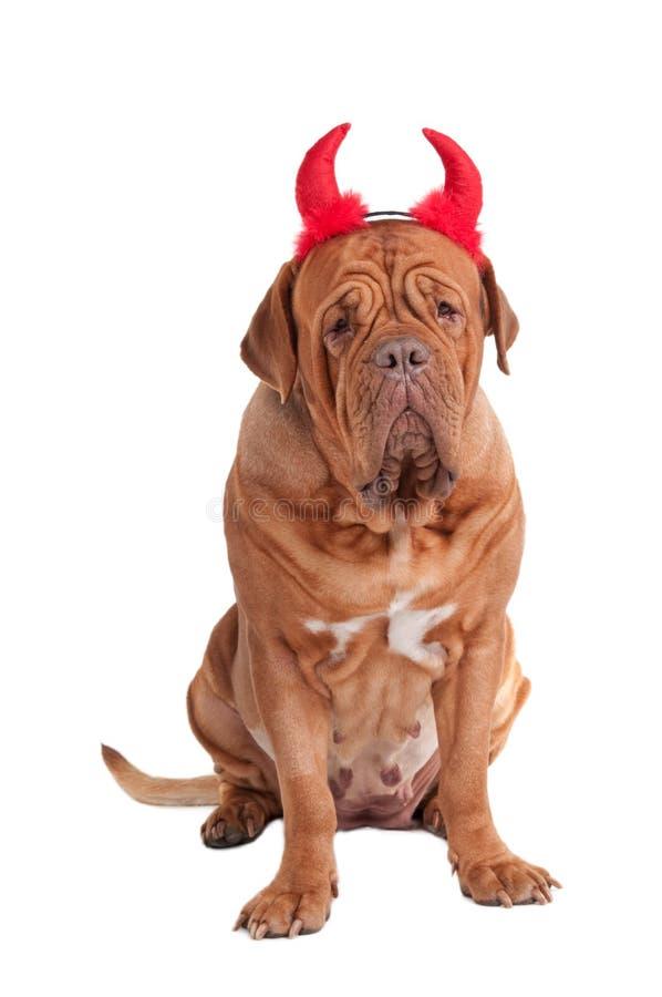 Retrato do cão enorme com hornes vermelhos para Halloween imagens de stock royalty free