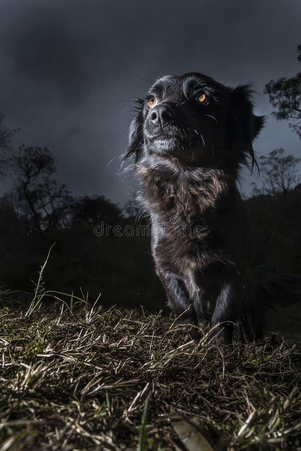 Retrato do cão preto imagens de stock