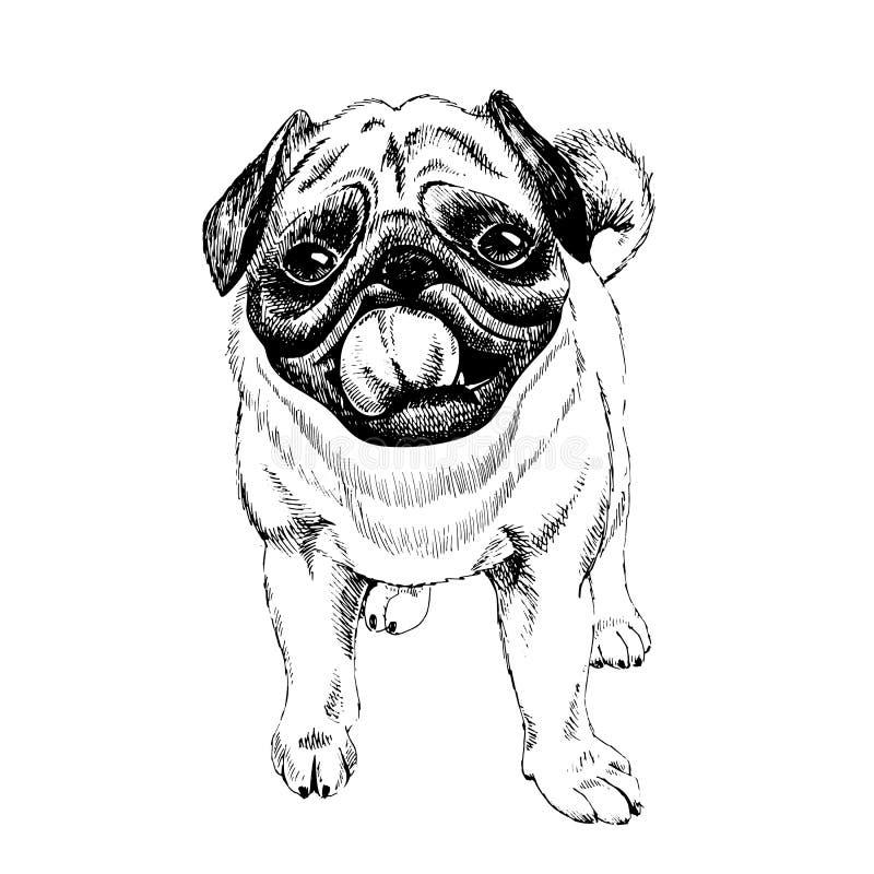 Retrato do cão do Pug Ilustração desenhada mão Arte gravada vetor Cachorrinho smilling amigável isolado no fundo branco ilustração do vetor