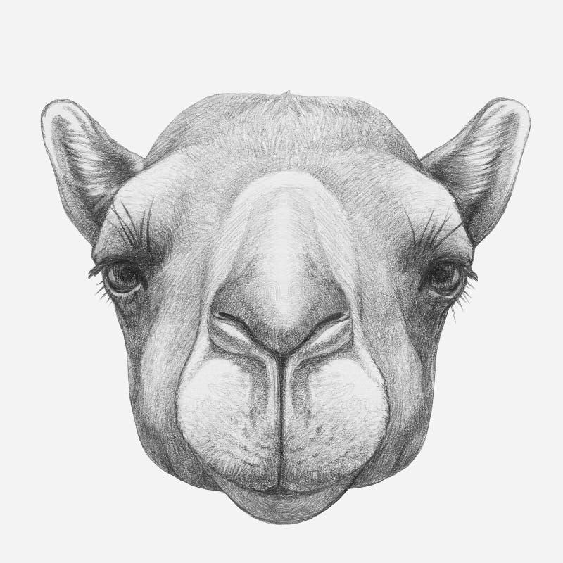 Retrato do camelo ilustração royalty free