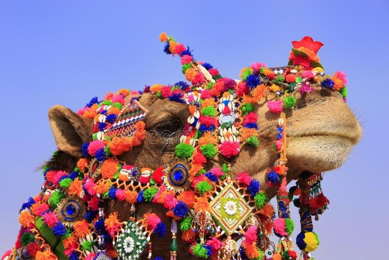 Retrato do camelo decorado no festival do deserto, Jaisalmer, Índia fotos de stock royalty free