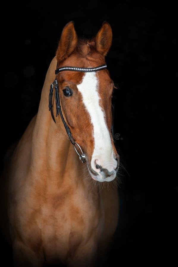 Retrato do cavalo bonito fotos de stock royalty free