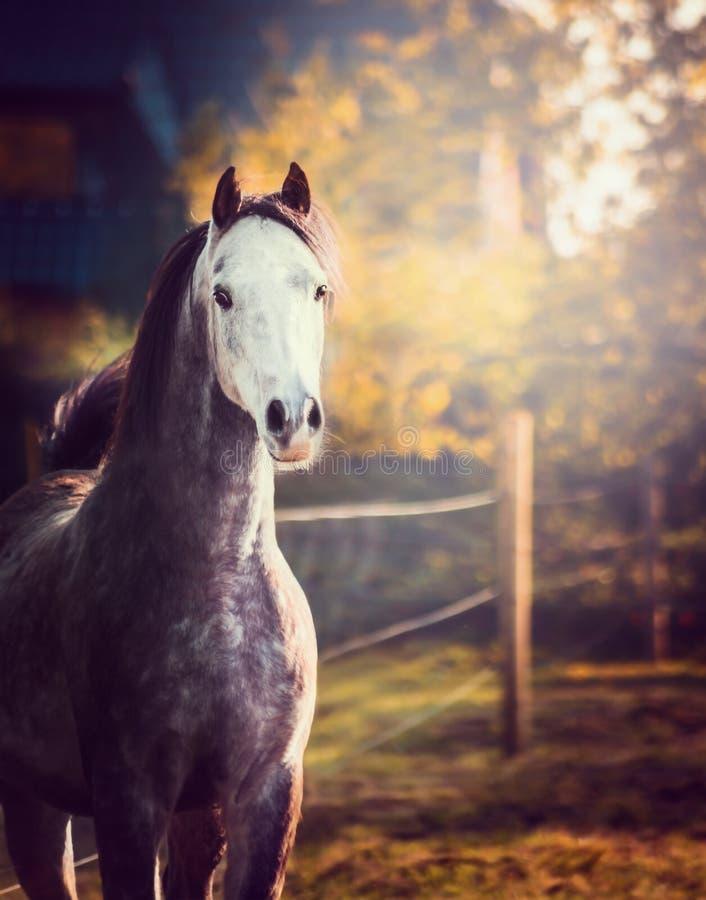 Retrato do cavalo com cabeça branca no fundo da natureza imagens de stock royalty free