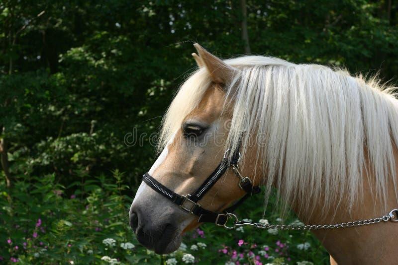 Retrato do cavalo com flores imagens de stock royalty free