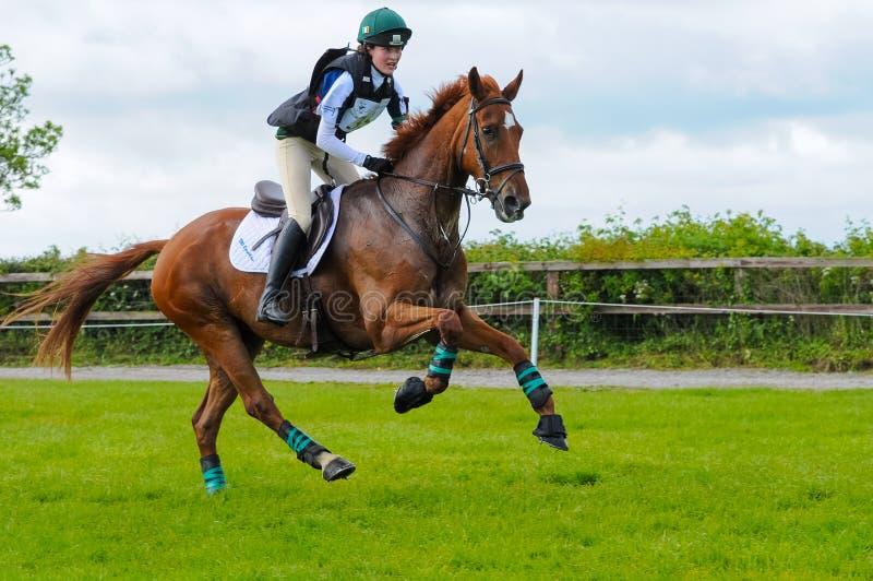 Retrato do cavalo de competência da mostra do cavalo de Tatersalls na ação na competição fotografia de stock royalty free