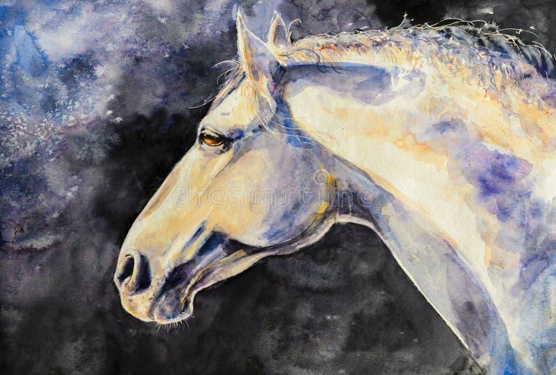 Retrato do cavalo de Lipizzan fotos de stock royalty free