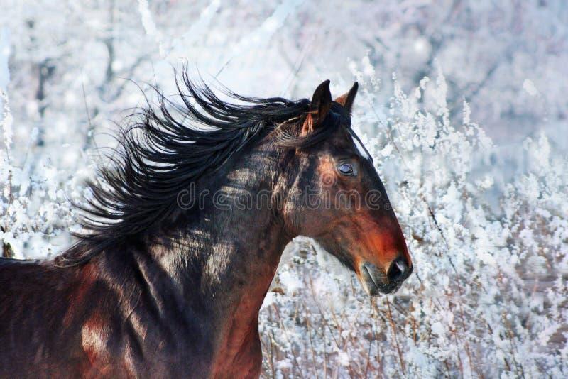 Retrato do cavalo fotos de stock