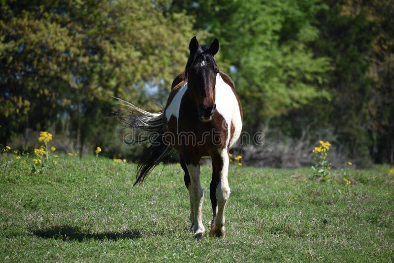 Retrato do cavalo em um campo aberto imagem de stock