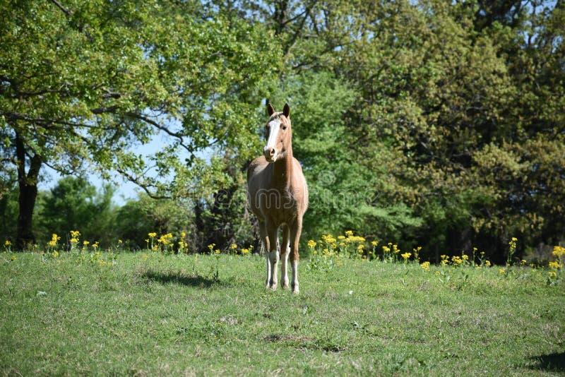Retrato do cavalo em um campo aberto imagem de stock royalty free
