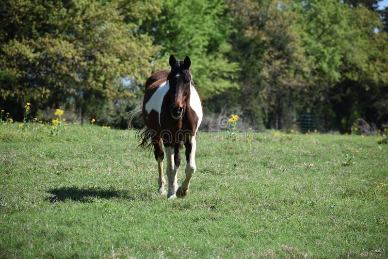 Retrato do cavalo em um campo aberto fotografia de stock royalty free