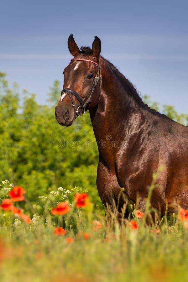 Retrato do cavalo nas flores imagem de stock royalty free